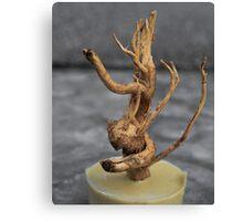 Amazing Roots-4 Canvas Print