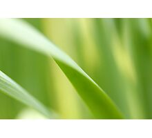 Green Blades of Grass Photographic Print