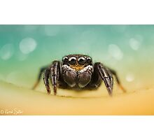 Salticidae (Unknown I.D) Photographic Print