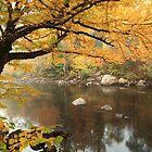 Misty River by Roupen  Baker