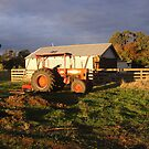 Tractor in the Evening Light, Campbell Town by Wendy Dyer