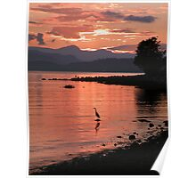 Sunset Heron Poster