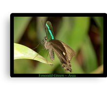 Emerald Peacock Butterfly Canvas Print