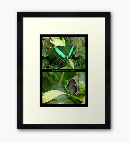 Emerald Peacock~ Collage Framed Print