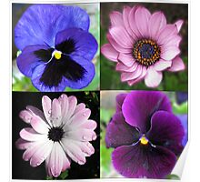 Cute Pansies and Daisies Collage Poster