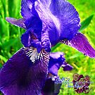 blue iris by LoreLeft27