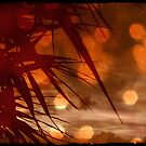 palms in red by geophotographic