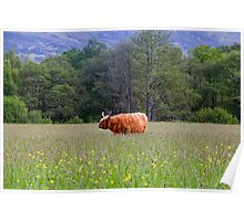 Spring In The Highlands Poster