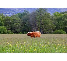 Spring In The Highlands Photographic Print