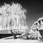 The Willow tree - Infrared by Hans Kawitzki