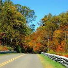 Blue Ridge Parkway by Sandy Woolard