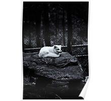Artic fox (Alopex lagopus) Poster