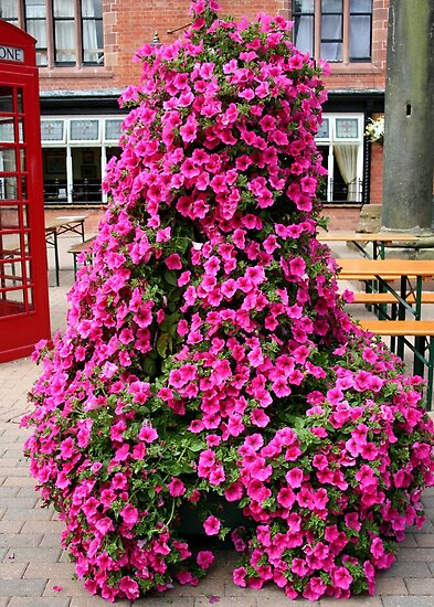 Petunia Display by AnnDixon