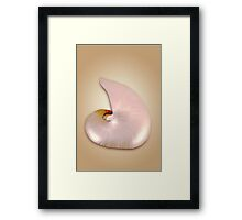 Pearlized Naurilus Framed Print