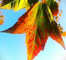 Seasons Change by James Aiken