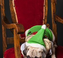 Pug Christmas Card by TheCoShow