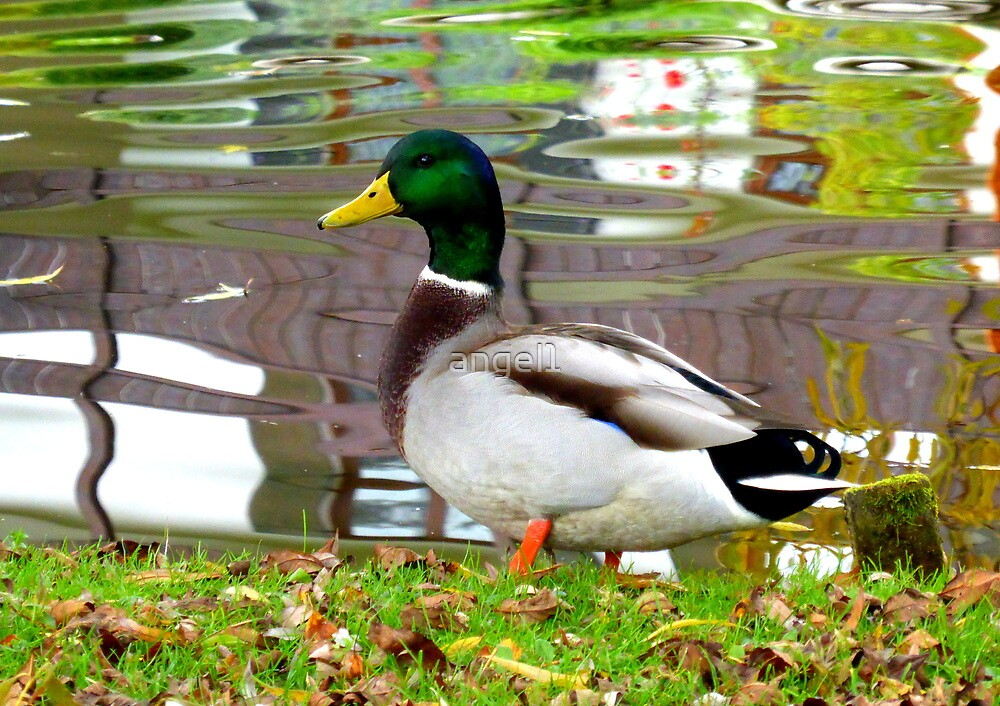 Be a DUCK by ©The Creative  Minds
