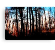 Forest after the fire Canvas Print