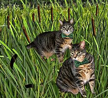 <º))))>< CATS AND CATTAILS <º))))><  by ✿✿ Bonita ✿✿ ђєℓℓσ