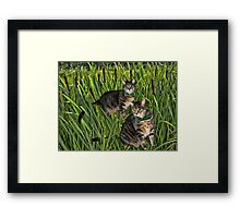 <º))))>< CATS AND CATTAILS <º))))><  Framed Print