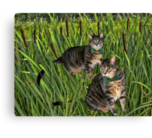 <º))))>< CATS AND CATTAILS <º))))><  Canvas Print