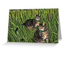 <º))))>< CATS AND CATTAILS <º))))><  Greeting Card