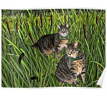 <º))))>< CATS AND CATTAILS <º))))><  Poster