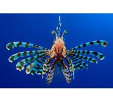 Lionfish Photographic Print