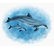Dolphin Mother and Calf Photographic Print