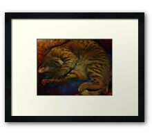 study of a sleeping cat Framed Print