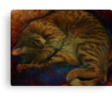 study of a sleeping cat Canvas Print