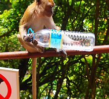 Monkey examines bottle by Fike2308