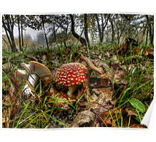 I Can't Hide ! Wild Mushrooms ~ Poster
