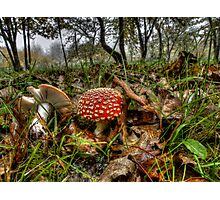 I Can't Hide ! Wild Mushrooms ~ Photographic Print