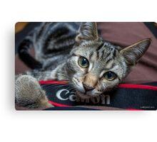 My Canon Cat Canvas Print