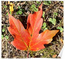 Autumn leaf Poster