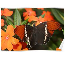 Black and Brown Butterfly Poster