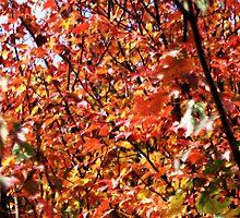 Orange Leaves by helenpartlow