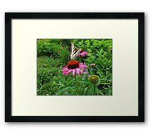 Swallowtail fun Framed Print