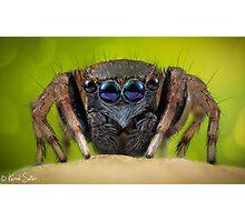 'Jotus sp.' Salticidae  Photographic Print