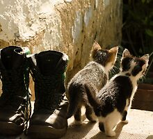 Young cats game by Septi79