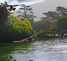 Birds of Stow Lake by David Denny