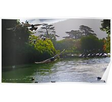 Birds of Stow Lake Poster