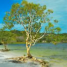 Lake McKenzie Tree by Penny Smith