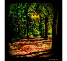 Enchanted Glen Photographic Print