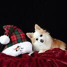 Christmas Dog by philw