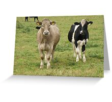 Bovine Curiosity. Greeting Card