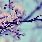Blossom by Karen E Camilleri