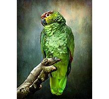 Forty Shades of Green Photographic Print