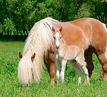 Haflinger, mom and foal by Katho Menden